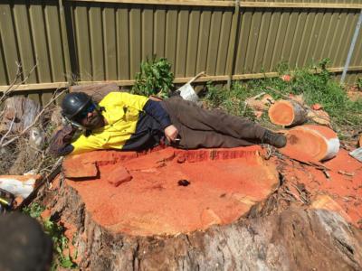 BOSS-Tree-Stump-Removal-Pruning- 00