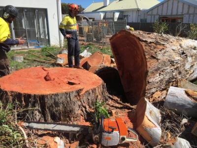 BOSS-Tree-Stump-Removal-Pruning- 01