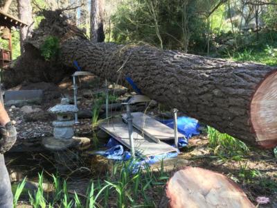 BOSS-Tree-Stump-Removal-Pruning- 02