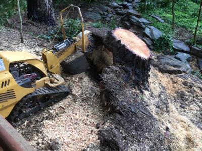 BOSS-Tree-Stump-Removal-Pruning- 05