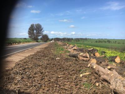 BOSS-Tree-Stump-Removal-Pruning- 09