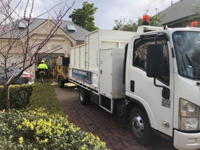 BOSS-Tree-Stump-Removal-Pruning- 13