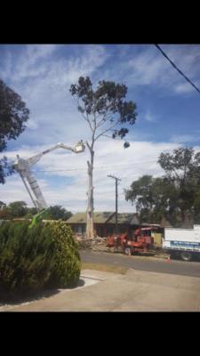 BOSS-Tree-Stump-Removal-Pruning- 21