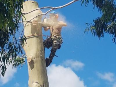 BOSS-Tree-Stump-Removal-Pruning- 22