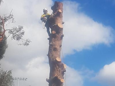 BOSS-Tree-Stump-Removal-Pruning- 23