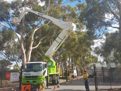 BOSS-Tree-Stump-Removal-Pruning- 24